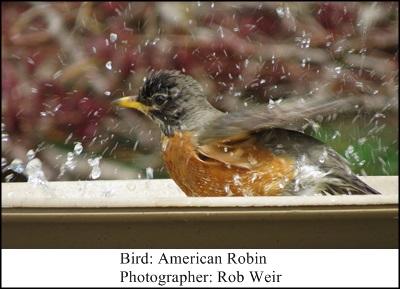 Birdbath Rob Wier 3