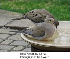 Birdbath Rob Wier 5