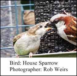 Rob Wiers Sparrow 1