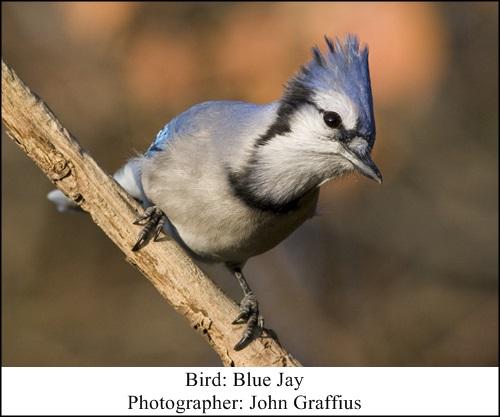 Blue Jay Looks 112010